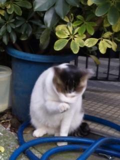 地域の猫さん