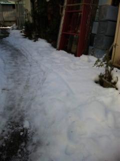 まだ残ってます、雪