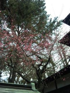 松ぼっくりと梅の花